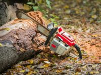 Can You Use You Electric Chainsaw to Cut Down a Tree?