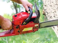 The Best Battery Powered Chainsaw: Cordless Ease in Your Backyard